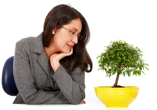 business woman looking after her bonsai tree hoping for fast growth isolated over a white background